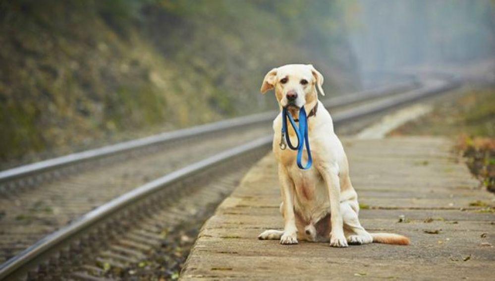 Resultado de imagen para perrito en tren