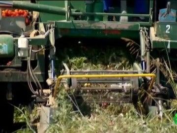 """Frame 8.333837 de: La agricultura intensiva está destruyendo el planeta : """"Es la principal causa de la pérdida de bosques"""""""