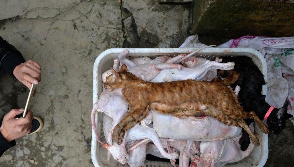 Matadero de gatos