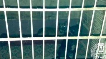 Rescatan en Usera a tres perros que vivían encerrados en un trastero