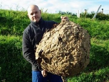 El apicultor Lolo Andrade con el nido de avispa asiática