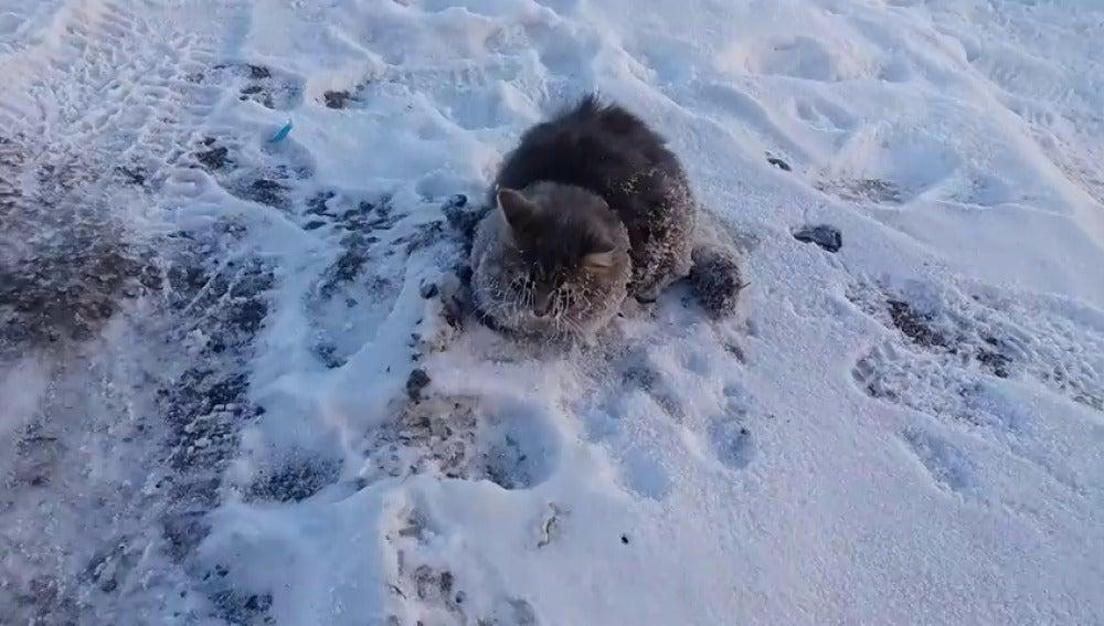 Frame 0.0 de: Rescatan a un gato a punto de morir congelado y pegado al suelo bajo temperaturas de -35º