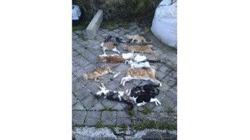 Colonia de gatos envenenada en Madrid