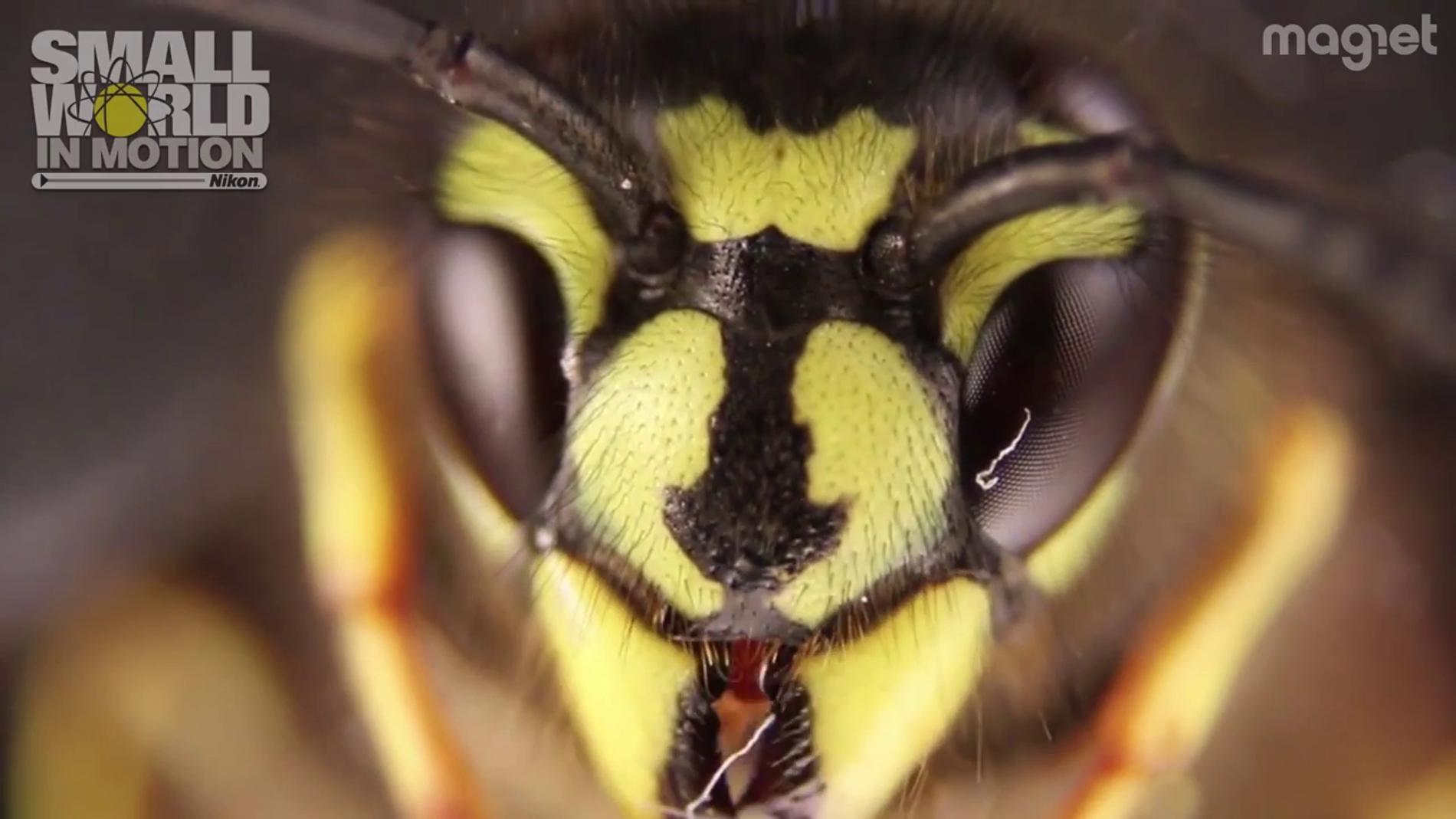 Imagen macro de una abeja