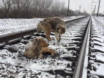 Panda y Lucy en las vías del tren