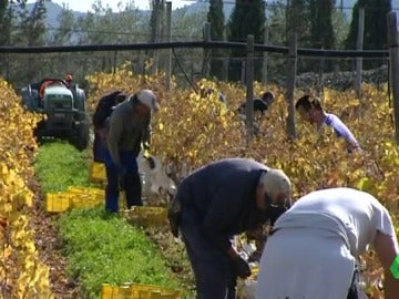 Frame 41.85953 de: Los productores de uva denuncian que no les salen las cuentas por la guerra de precios con los supermercados