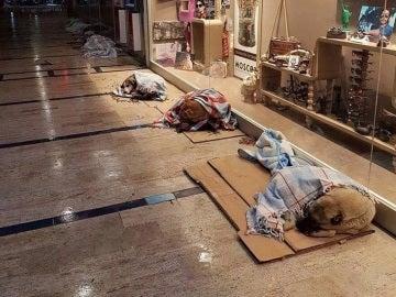 Perros callejeros en el centro comercial