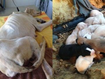 Perrita junto a sus cachorros rescatados