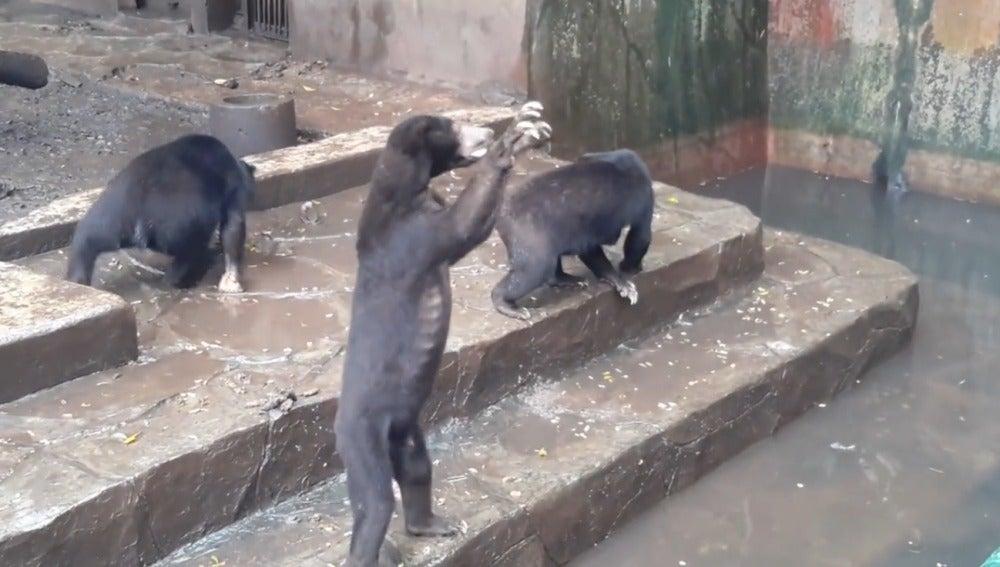 Momento del vídeo en el que un oso suplica por comida