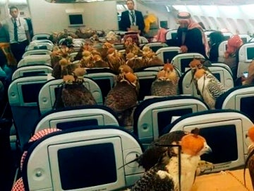 Halcones volando en primera clase
