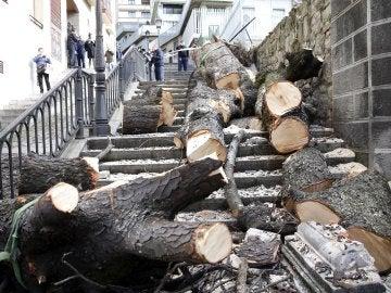 Árbol caído en Bilbao