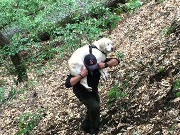 El bombero rescata al perro
