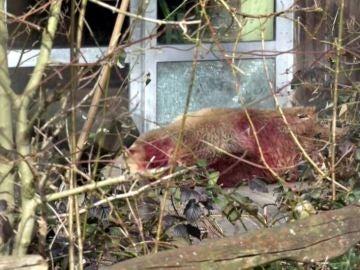 Abaten en el zoo de Osnabrück a un oso que se había escapado de su recinto