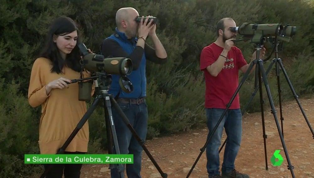 """Frame 4.616119 de:  Cientos de personas visitan cada año la sierra zamorana de la Culebra para ver al lobo en su hábitat: """"No hay palabras"""""""