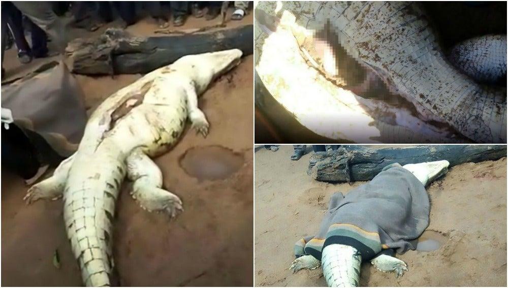"""Matan a un cocodrilo y sacan a un niño de ocho años: """"Los restos del niño estaban en el estómago de la bestia"""""""