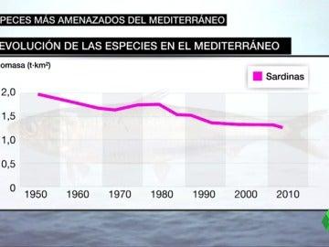 """Frame 31.55431 de: Los peces más amenazados del mediterráneo: """"Los langostinos, las langostas, la merluzas, el mero, se cogen menos ahora"""""""