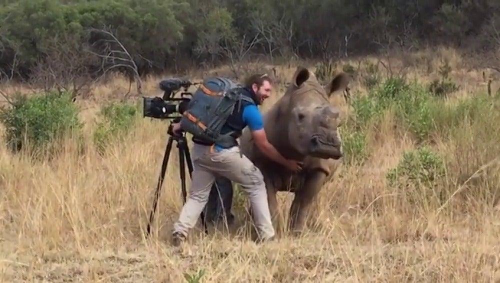 Un rinoceronte pide a un cámara que le frote la barriga