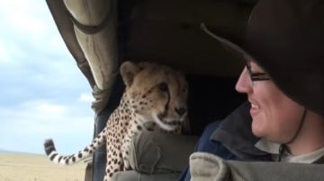Un guepardo se cuela en el coche de unos turistas del safari