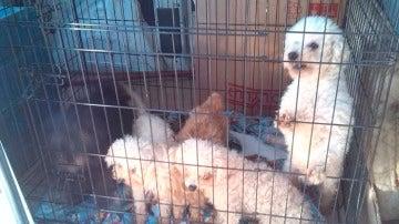 Perros fotografiados por los Mossos d'Esquadra