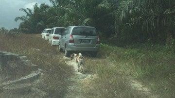 Un perro persigue al cortejo fúnebre de su dueña recién fallecida