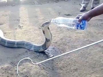 El animal bebió agua directamente de la botella para calmar su sed
