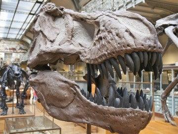 Los colmillos son un rasgo sexualmente dimórfico en muchos mamíferos, pero no tiene por qué ser así en los dinosaurios