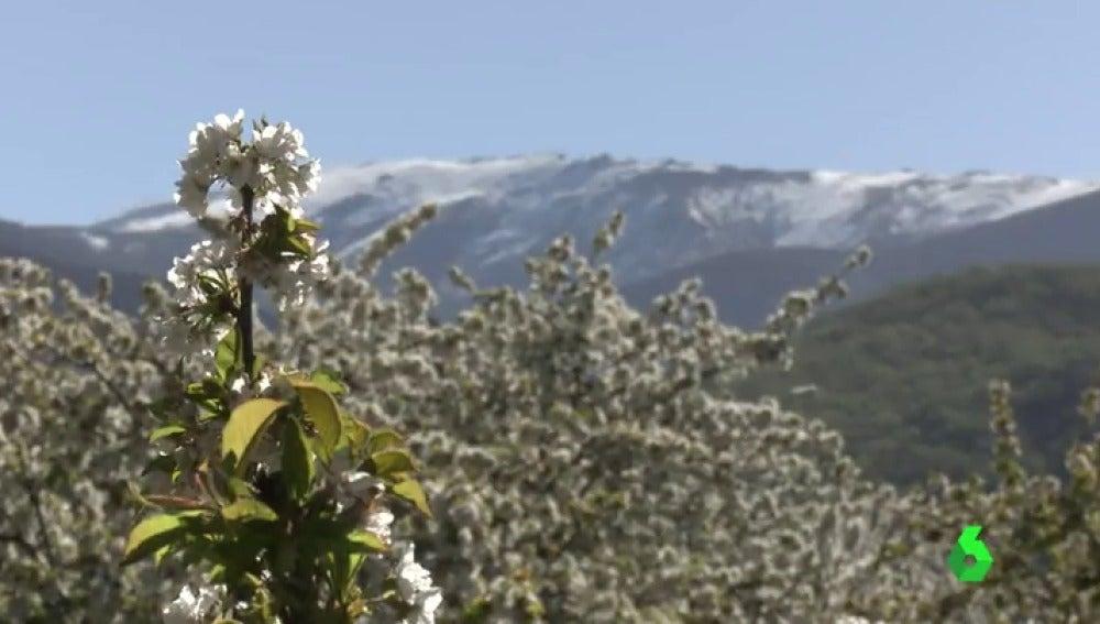 """Frame 0.696976 de: La primavera adorna los campos en España y los japoneses no se lo quieren perder: """"Quieren adoptar el campo de girasoles"""""""