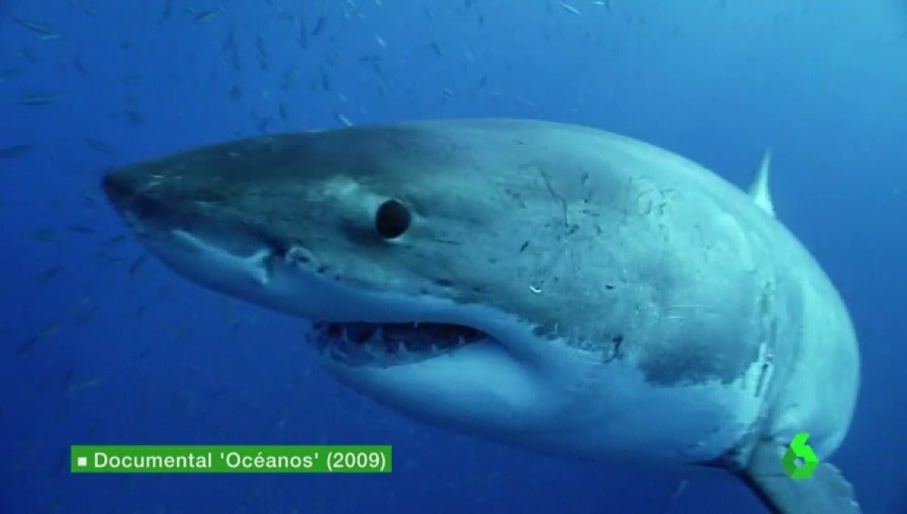 Frame 2.938666 de: -OCEANOS CARLOS