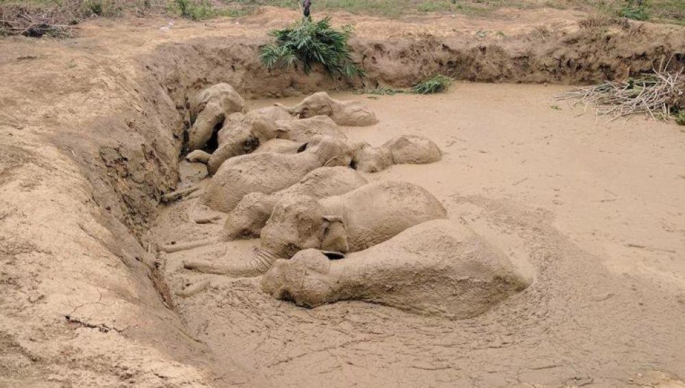 Elefantes atrapados en el lodo