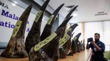 Icautan en Malasia 18 cuernos de rinocerontes