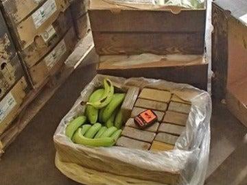 Alijo de droga junto a un cargamento de plátanos