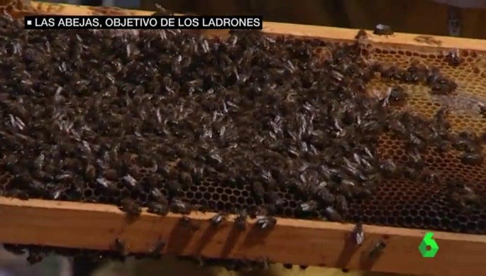 Frame 20.354989 de: abejas