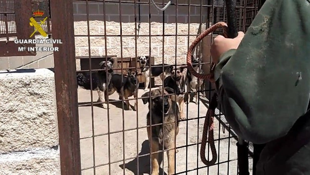 Intervienen una instalación con 59 perros en pésimas condiciones higiénico-sanitarias