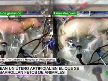 Frame 10.166624 de: Crean un útero artificial capaz de mantener con vida a fetos animales extremadamente prematuros