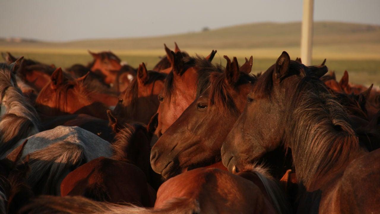 Varios caballos en una imagen de archivo