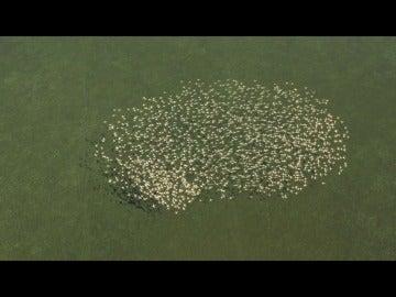 Imagen de una bandada de aves desde el cielo de Doñana