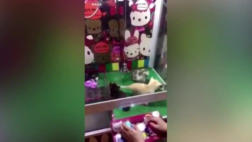 Frame 3.503178 de: Instalan en china una máquina de gancho que sustituye peluches por gatos vivos