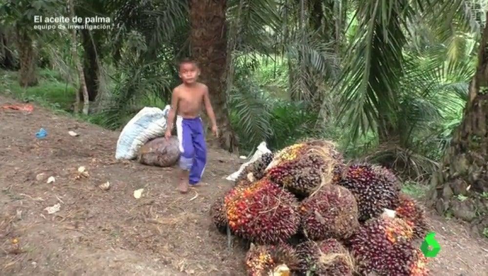 Equipo de Investigación logra grabar cómo se explota a niños en las plantaciones de aceite de palma de Indonesia