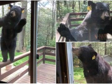 La graciosa imagen de un oso mirando por la ventana de una mujer mientras cocinaba brownies