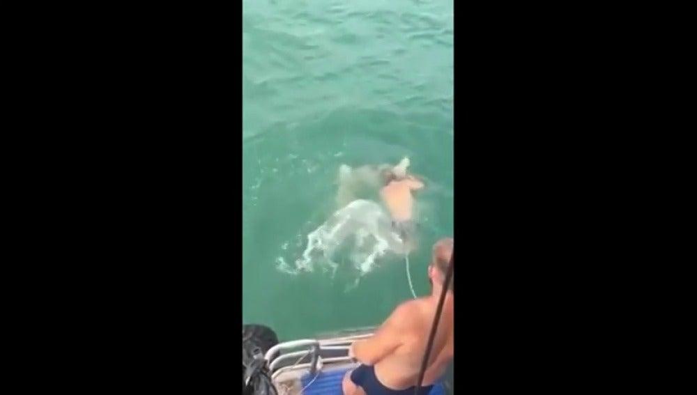 Frame 10.855994 de: Un hombre recibe un mordisco al intentar cabalgar sobre un tiburón y acaba matando al animal