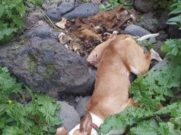Imagen de un perro despeñado que acompaña la petición de change.org reclamando justicia