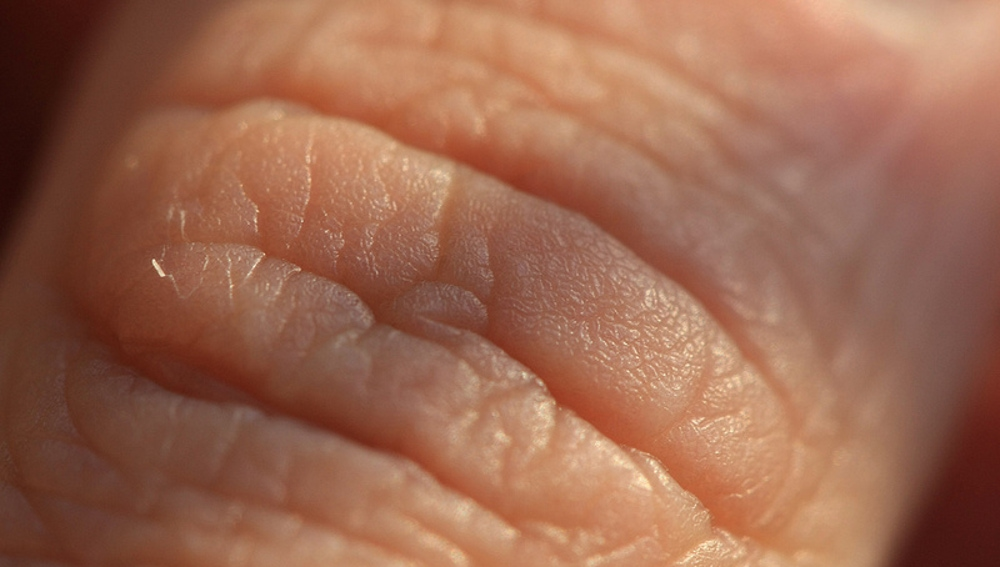El colágeno, presente en muchos cosméticos. es una de las proteínas que mantienen la piel tersa