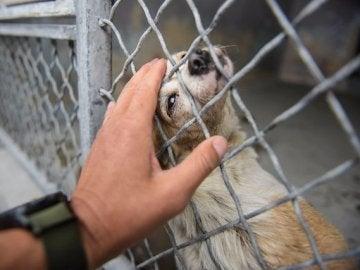 El fotógrafo John Hwang acaricia a la perra que apenas podía moverse