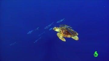 """Recogida de firmas para proteger el fondo marino de El Hierro: """"Hacemos muchos kilómetros cuando realmente aquí tenemos paraísos"""""""
