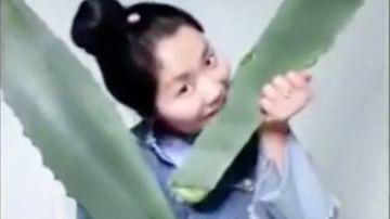 Zhang comiendo la planta venenosa