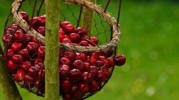 ¿Conoces los beneficios de las cerezas?
