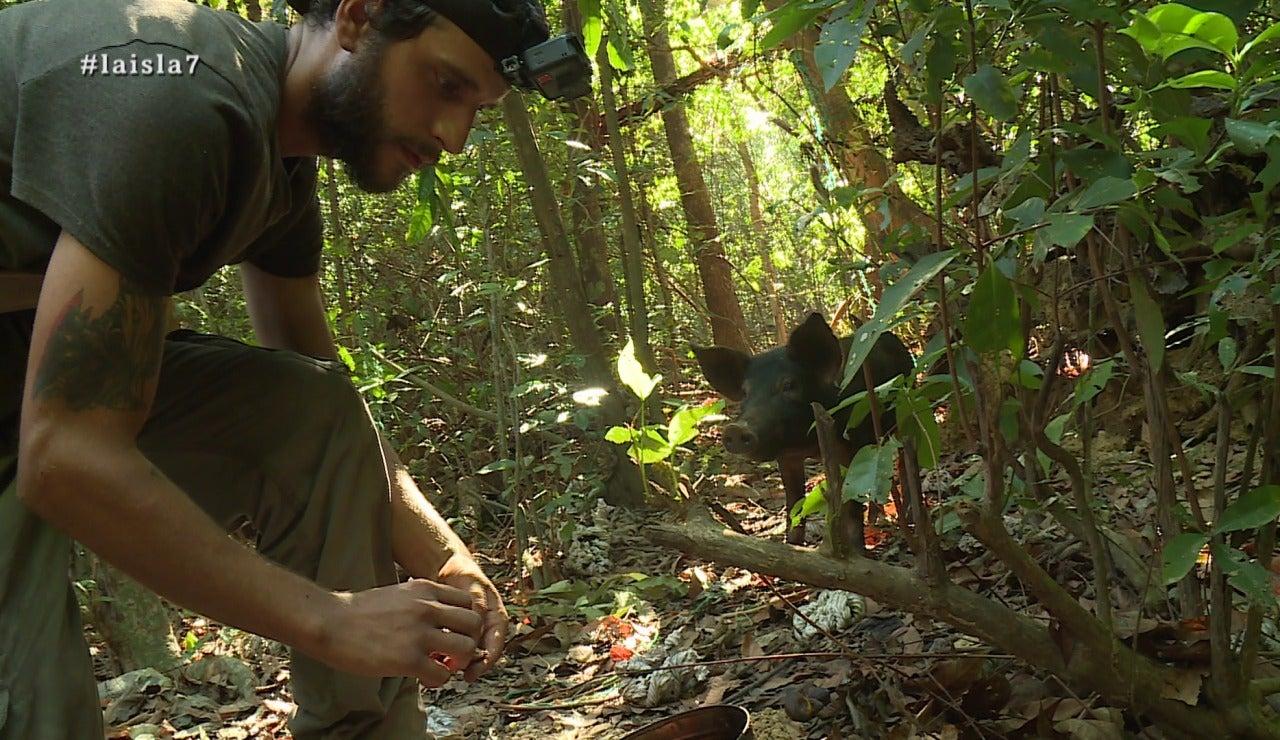 La Isla a la caza del jabalí
