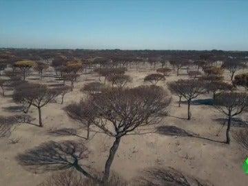 COLAS INCENDIO DRONES