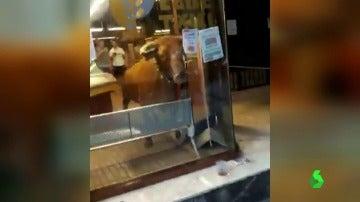 Vaquilla en un establecimiento