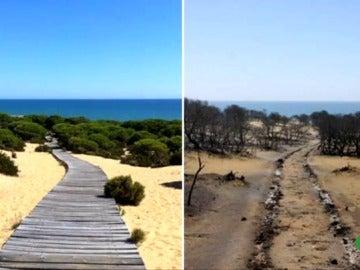 El antes y el después del incendio en Moguer